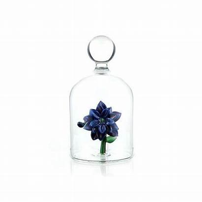 Glass Jar Flowers Flower Coral Purple