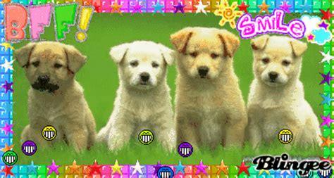perritos tiernos picture  blingeecom