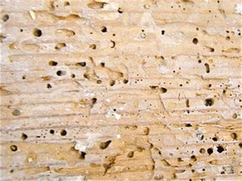 the early warning signs of a termite infestation
