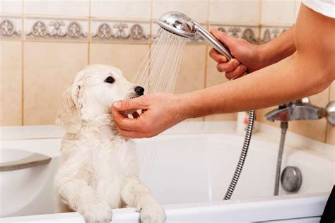 Bath Sink Strainer by Plumbing Tips For Pet Owners Len The Plumber