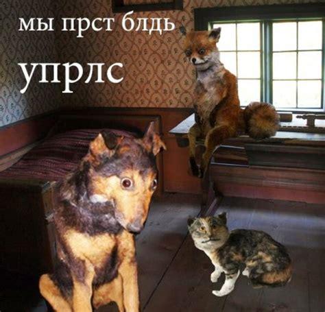 Stoned Fox Meme - 513 jpeg