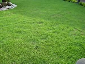 Gazon En Plaque : gazon zoysia tenuifolia en plaques le gazon des ~ Premium-room.com Idées de Décoration
