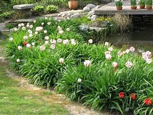 Tulpen Im Garten : tulpen diese sorten sind besonders langlebig mein ~ A.2002-acura-tl-radio.info Haus und Dekorationen