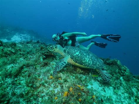 Cozumel Two Tank Scuba Diving - Cozumel Cruise Excursions