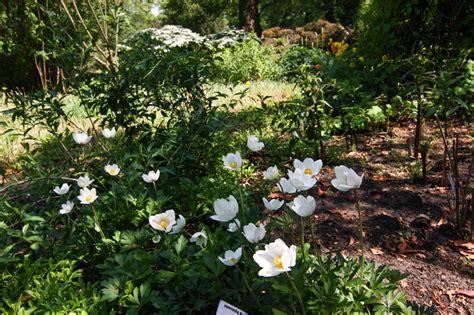 Garten Schatten Pflanzen by Schattenpflanzen Stiftung Bremer Rhododendronpark
