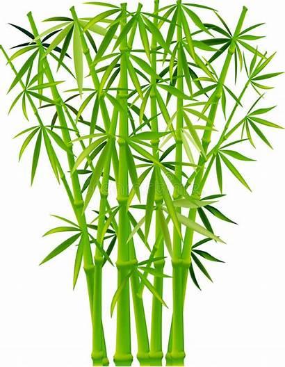 Bamboo Vector Illustration Clip Plant Depositphotos Vectors