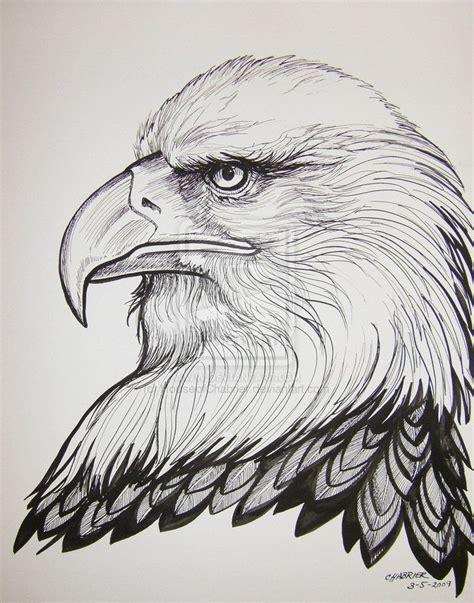 bald eagle   ink   ink wash