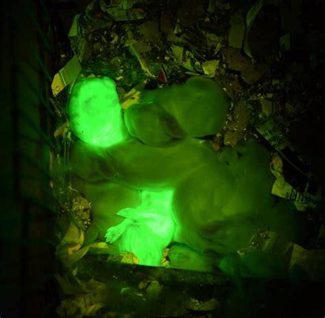 Pflanzen Die Im Dunkeln Leuchten by Armer Meister Le Forscher Erschaffen Leuchtende
