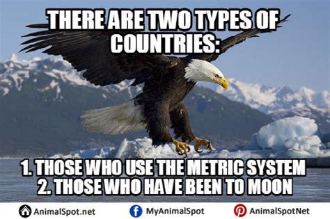 Eagle Memes - bald eagle memes
