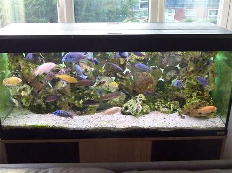 Aquarium Fish Prices Tanks Price Photo Fish Tanks
