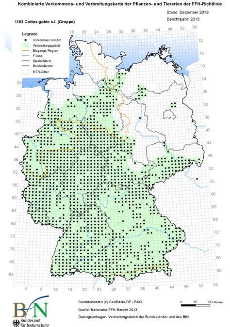 groppe cottus gobio deutschlands natur