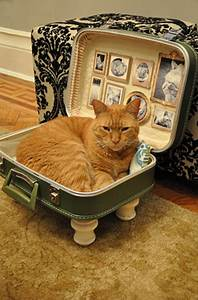19 Most Amazing Ideas To Make Cool  U0026 Cozy Bed For Your Cat