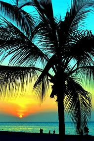Palm Tree Sunset Beach Hawaii