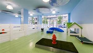 25 best ideas about dog hotel on pinterest dog boarding With the dog house daycare