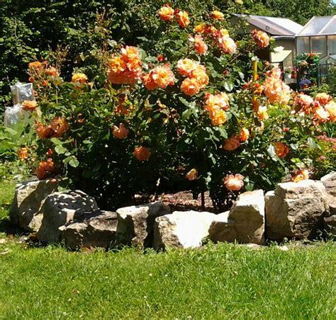 Rozes manā dārzā | Pumpkin patch, Roz, Outdoor