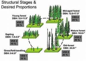 Forest Structural Stages