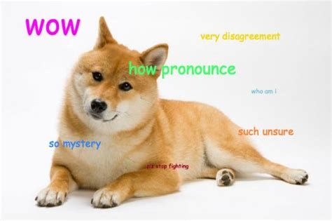 Doge Wow Meme - doge weird pictures of dogs that i don t understand