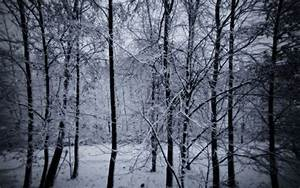 Snowy Forest Wallpapers - Wallpaper Cave