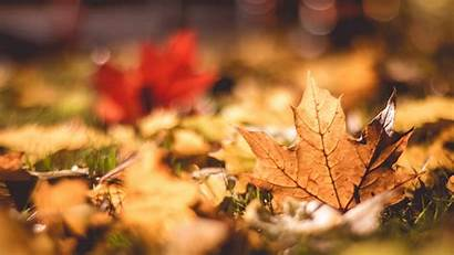 Autumn Leaves Fall Macro Bokeh Wallpapers 1080