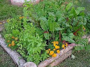 Strategic Area How To Start An Organic Garden At Home