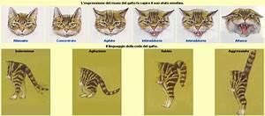 Il Linguaggio Dei Gatti CP05 » Regardsdefemmes