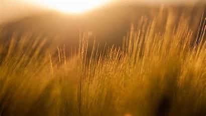 Yellow Sun Field Orange Filter Rays Barley