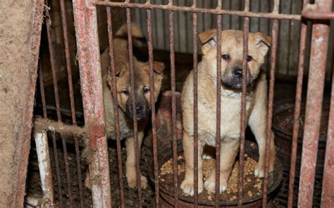 dogs rescued  dog meat farm  south korea