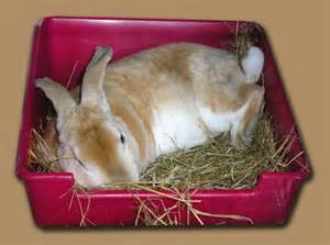 hd animals rabbit bedding