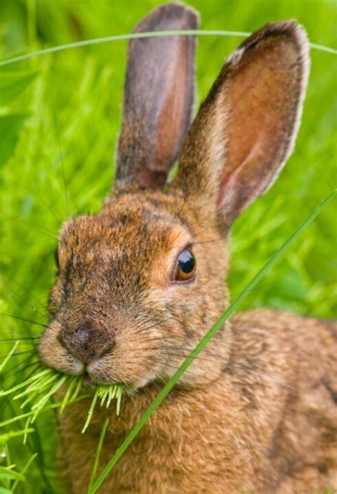 rabbits  images  pinterest bunnies