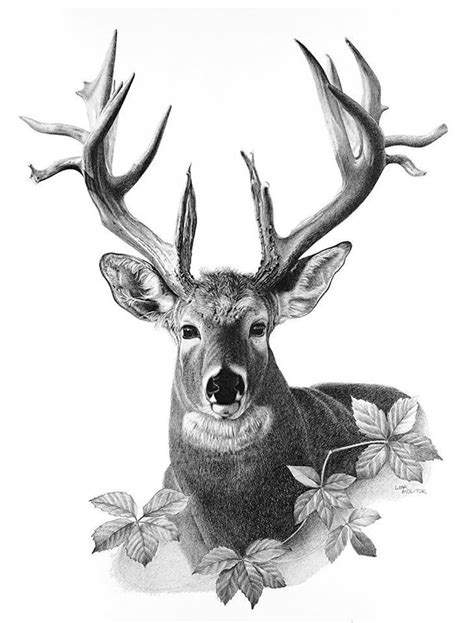 Majestic Deer Pencil Drawing Print Etsy