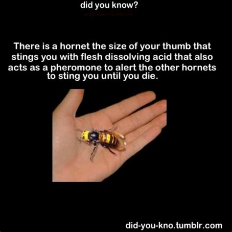 tracker jacker bees tracker jackers they exist hunger games pinterest survival real life and im scared