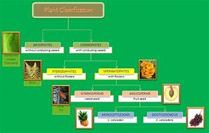 Educative Diagrams  Plant Classification Diagram