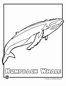 Humpback Whale Coloring Page Coloring Home