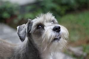 8 Most Popular Terrier Breeds – iHeartDogs.com