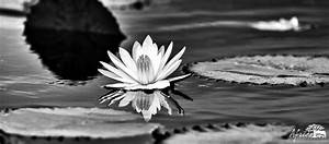 Nature photography in black and white - Africa Geographic
