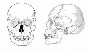 Human Skull Anatomy Coloring Page