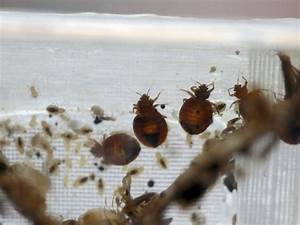 pittsburgh39s bed bug problem persists patch With bed bugs pittsburgh