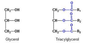Forum afvallen met aminozuren