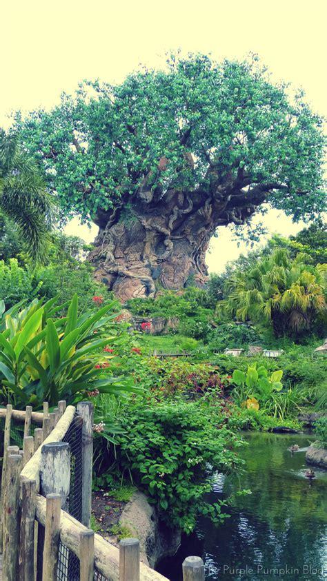 Disney Animal Kingdom Wallpaper - 100 days till disney walt disney world trip planning