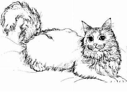 Coloring Pages Cats Cat Warriors