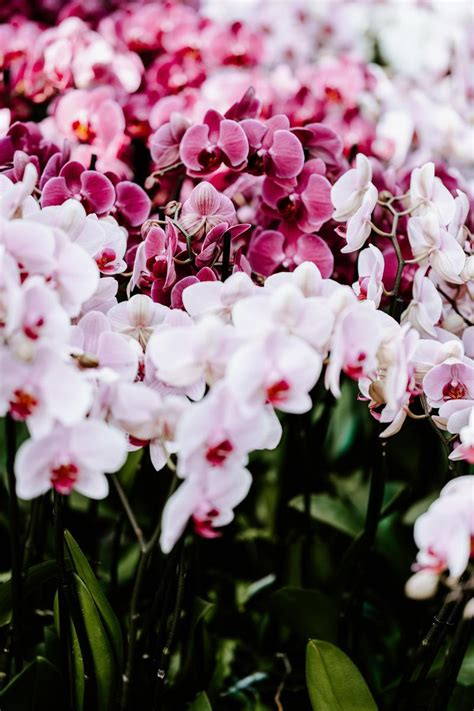 Tags:insects, butterfly, insect, nature, one. Wallpaper Day   flowers, spring, orchids, delicate for HD ...