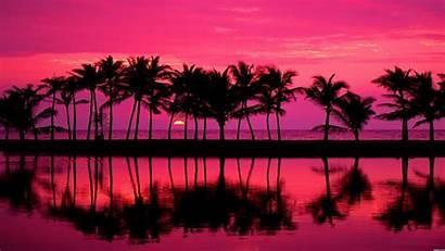 Sunset Wallpapers Palm Sunsets Tree Fondos Paisajes