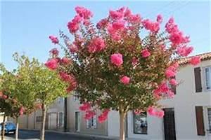 Taille Du Lilas Des Indes : lagerstromia lilas d 39 t lilas des indes conseil ~ Nature-et-papiers.com Idées de Décoration
