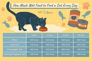 How Much Wet Food To Feed A Cat Every Day
