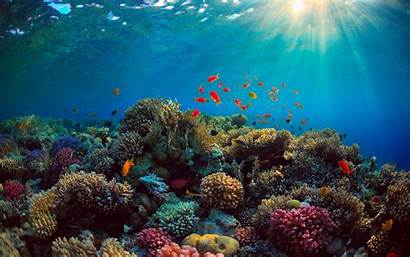 Underwater Coral Reef Fish Landscape Ocean Desktop