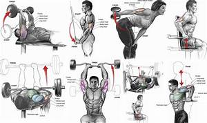 Six Exercises To Quickly Get The Triceps Of A Fitness Model