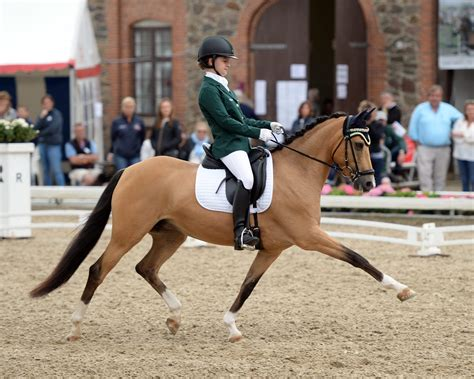 dressage pony european championships jumping eventing riders irish denmark robinson team emily kate horse ireland shine competing imagine crown sport