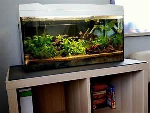 Aquarium Unterschrank Ikea : kallax als aquarium unterschrank aquarium fische und pflanzen ~ A.2002-acura-tl-radio.info Haus und Dekorationen