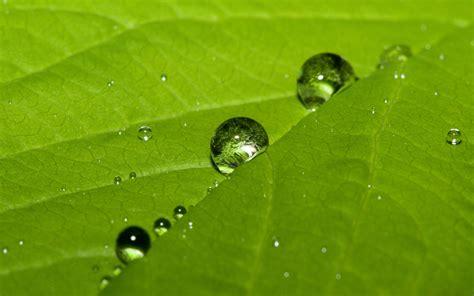 water dew drops leaf - HD Desktop Wallpapers | 4k HD