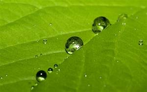 2560x1600 Water drops on leaf desktop PC and Mac wallpaper
